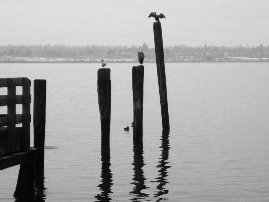 Bellingham Photograph - Bellingham Bay Birds In Black And White by Karen Molenaar Terrell
