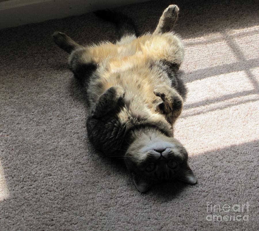 Belly Photograph - Belly Up by Michelle Powell