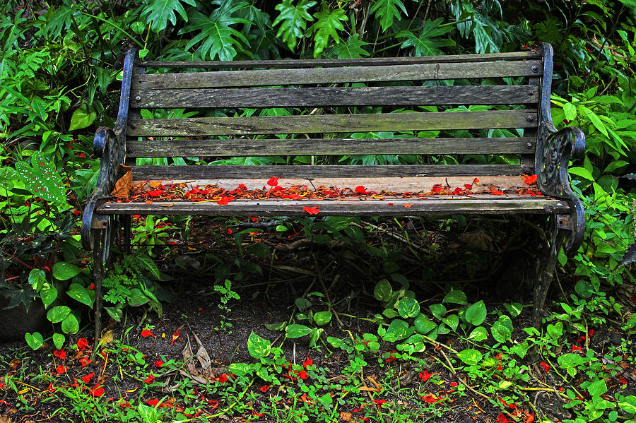 Bench and Flowers- St Lucia. by Chester Williams