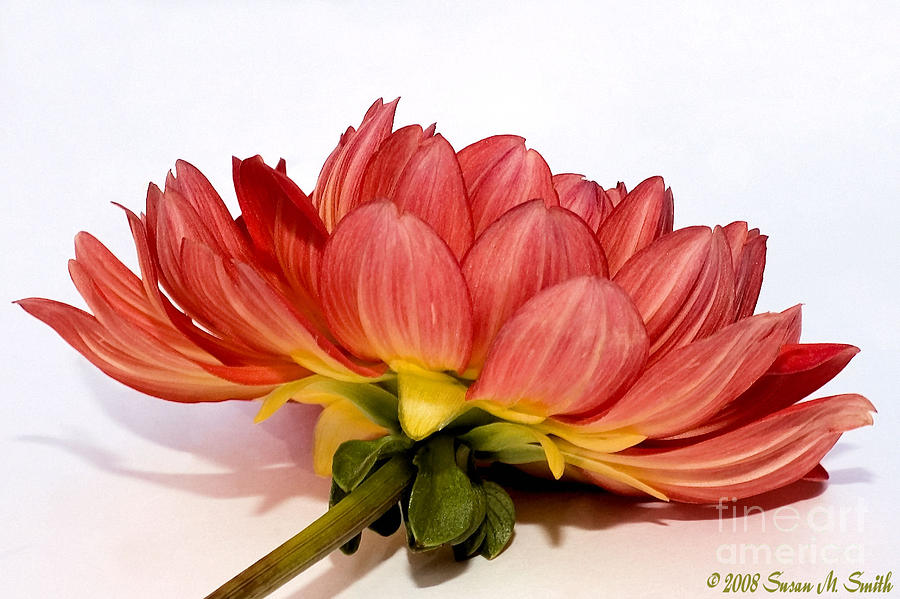 Flower Photograph - Beneath Me by Susan Smith