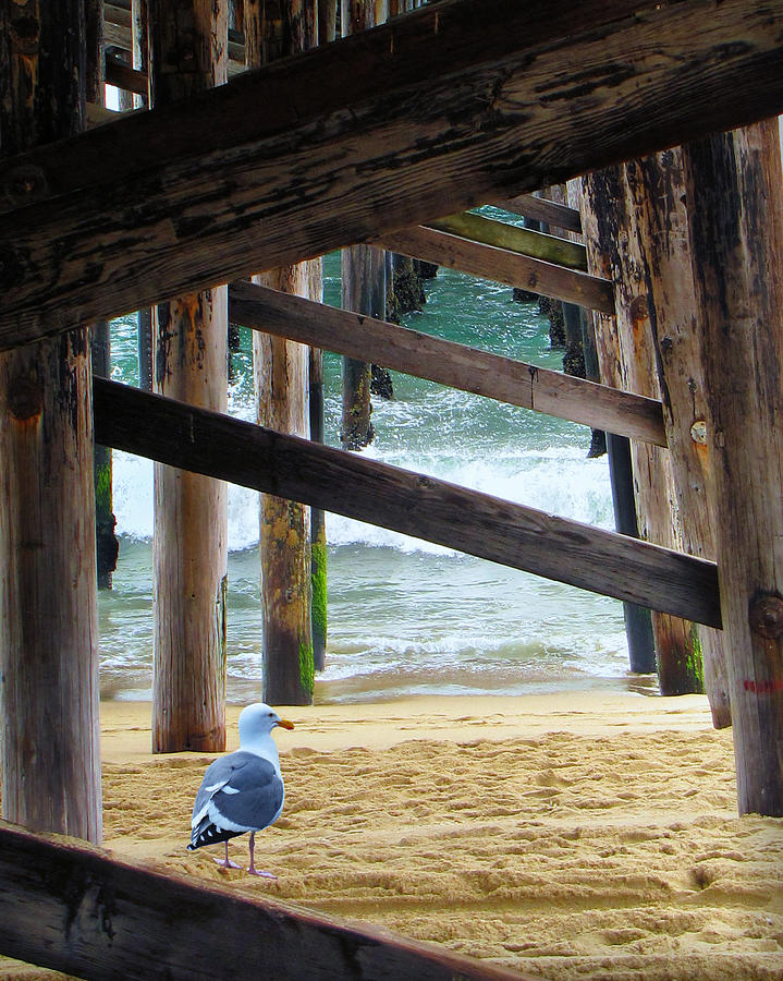 Gull Photograph - Beneath The Pier II by Diane Wood