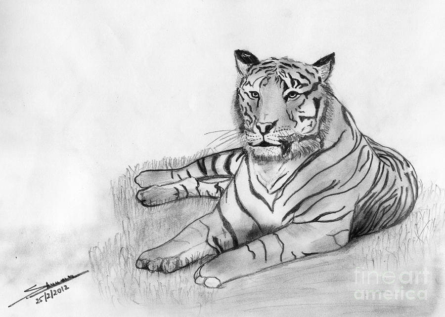 Landscape drawing bengal tiger by shashi kumar