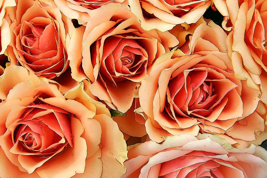 Kg Photograph - Bergen Roses by KG Thienemann