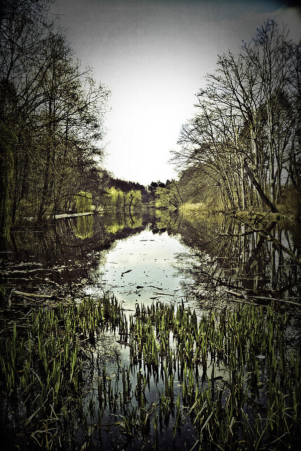 Forest Photograph - Berlin Forest by Bassem El youssef