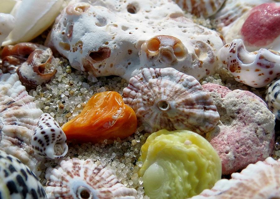 Shells Photograph - Bermuda Beach Shells by Janice Drew