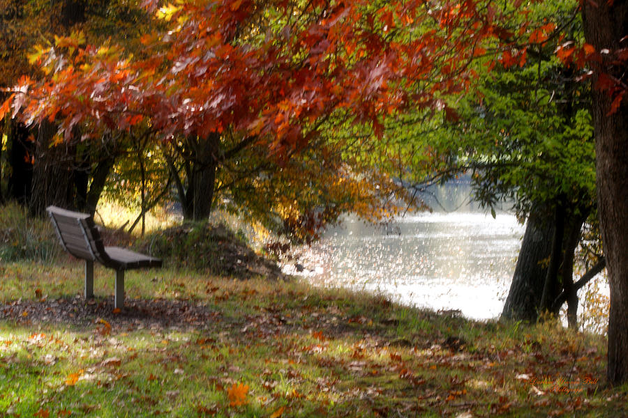 Autumn Photograph - Best Seat On The Bank by Darlene Bell