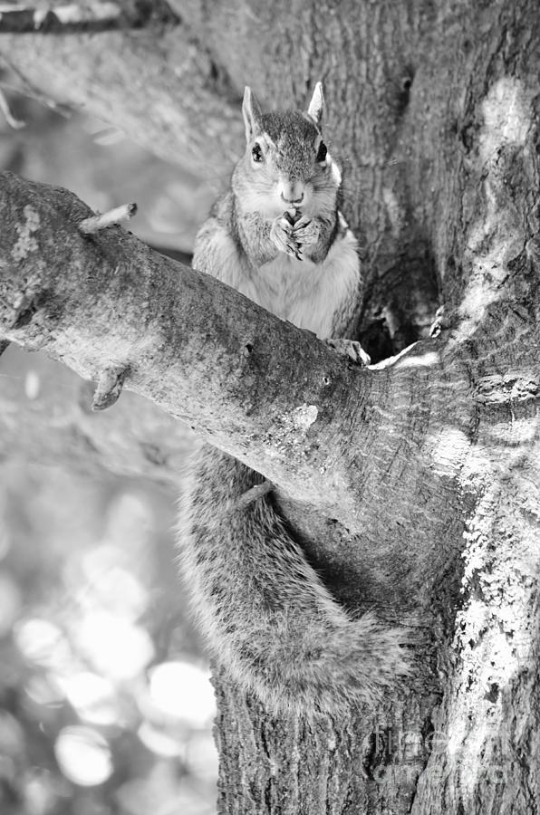 Squirrel Photograph - Betsy by Lynda Dawson-Youngclaus