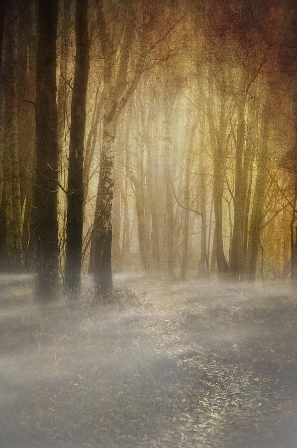 Woodland Photograph - Beware Misty Woodland Path by Meirion Matthias