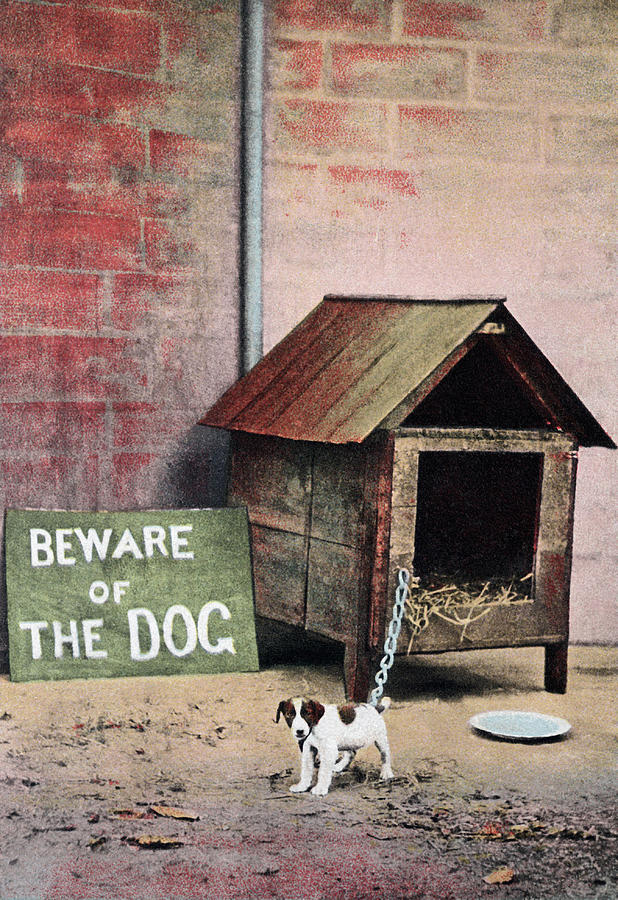 beware of dog sign with small dog photograph by brand x pict