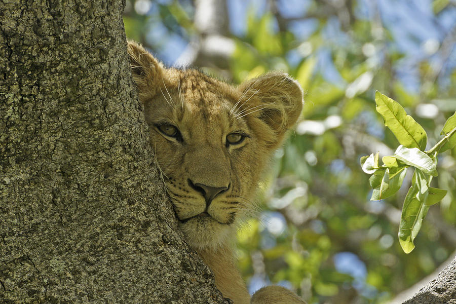 Africa Photograph - Biding My Time by Michele Burgess