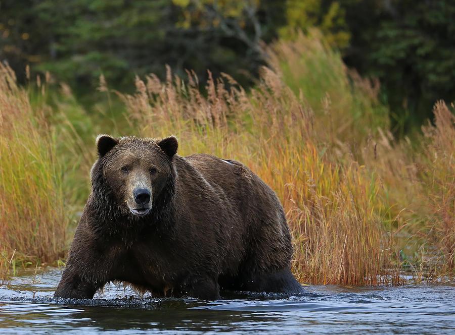 bears wallpaper ipad