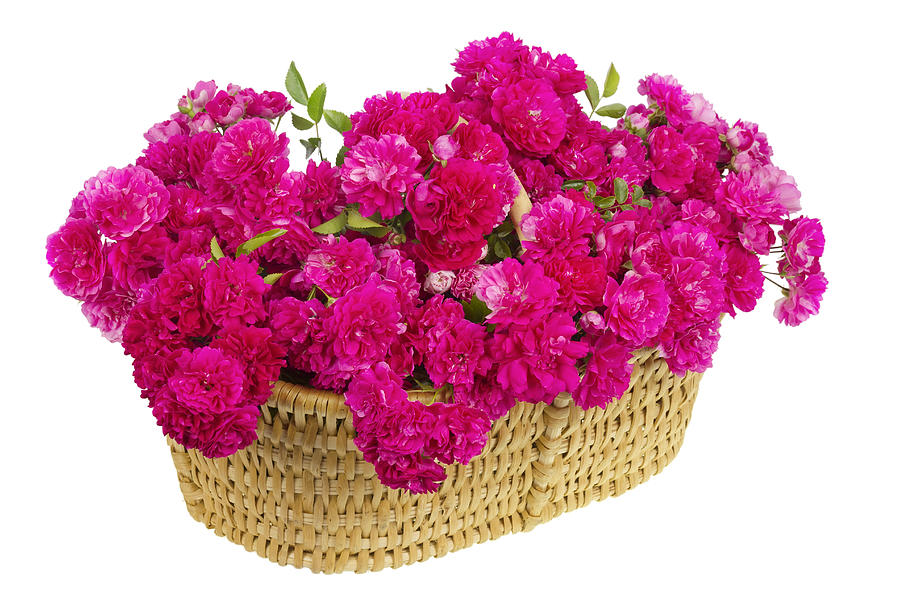 Big basket with huge bouquet of pink roses photograph by for Biggest bouquet of flowers