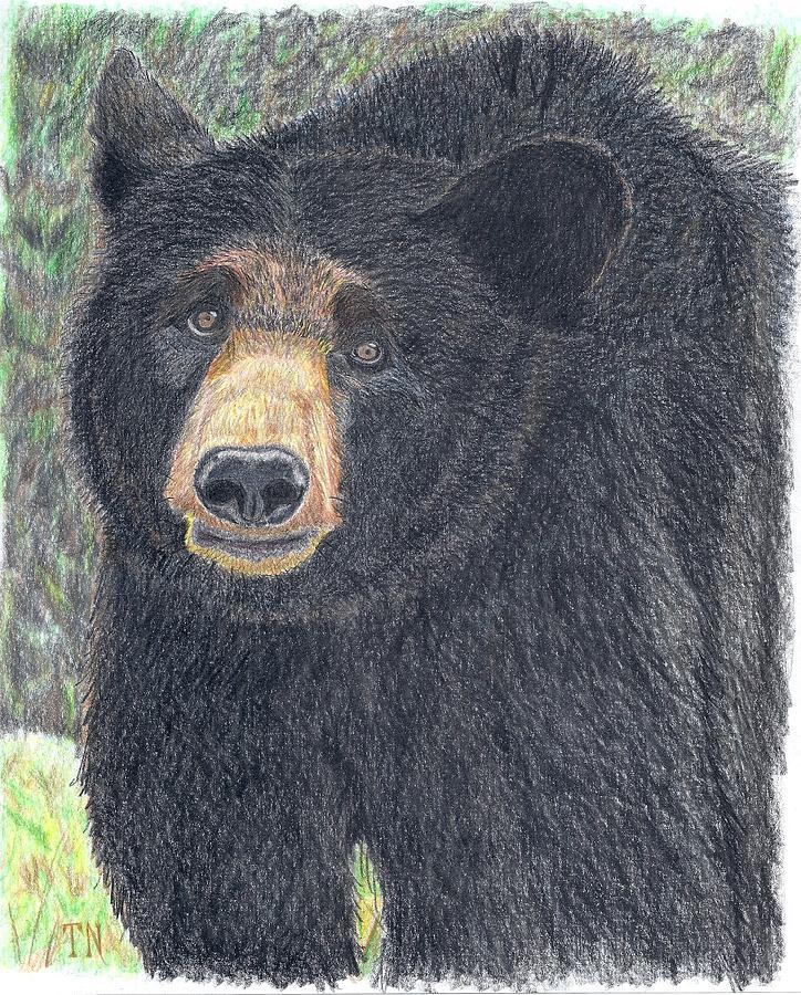 Black Bears Drawing - Big Bear by Tony  Nelson