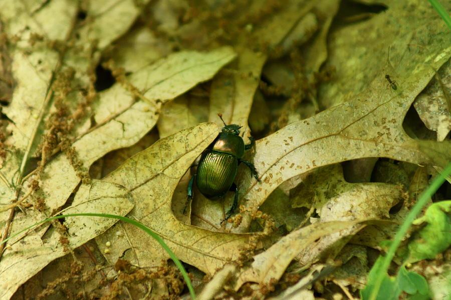 Bug Photograph - Big Bug by Jennifer Kosminskas