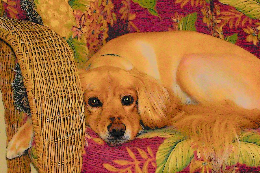 Dogs Digital Art - Big Eyes by Wide Awake Arts