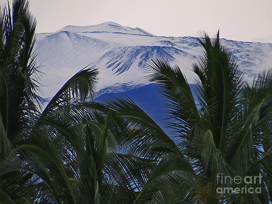 Big Island Palms and Snow by Bette Phelan