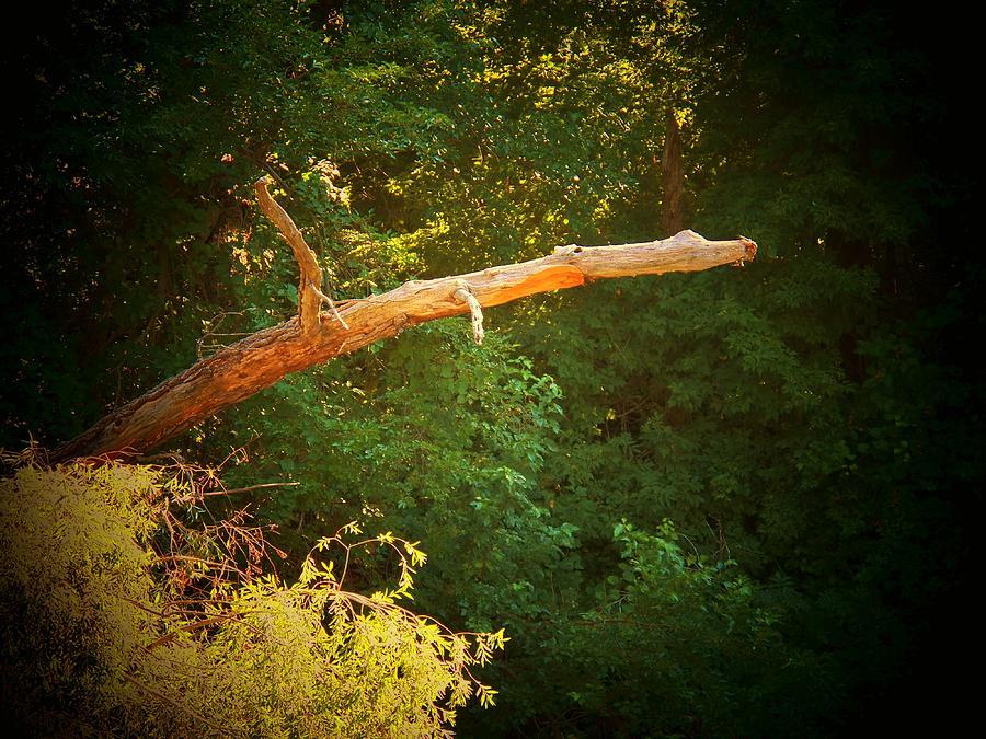 Marshall Michigan Photograph - Big Log by Joyce Kimble Smith