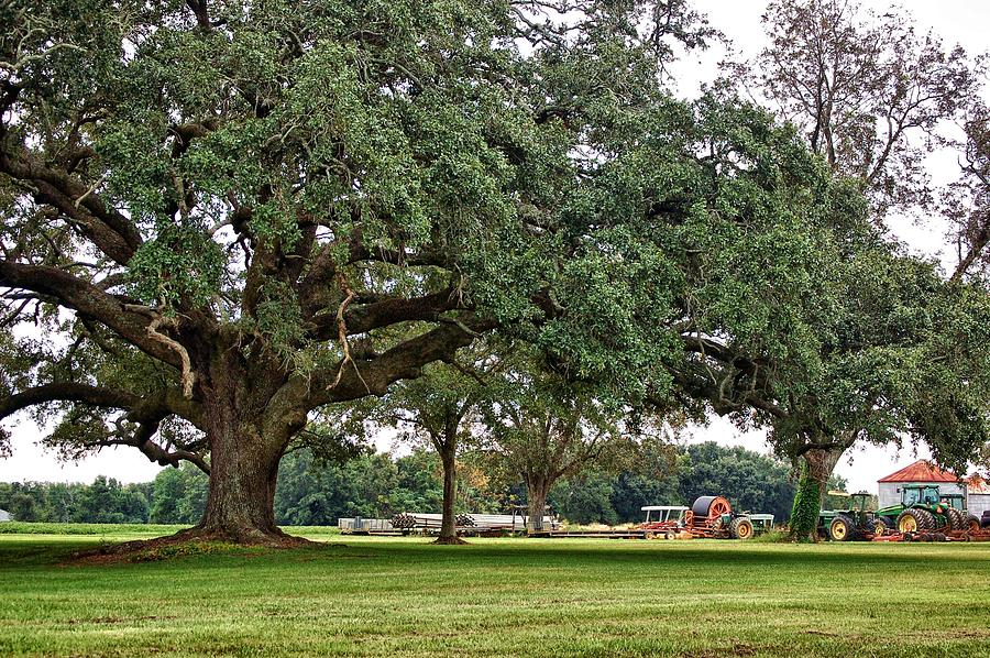 Alabama Photographer Digital Art - Big Oak And The Tractors by Michael Thomas
