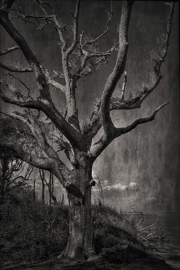 Black And White Photograph - Big Talbot Island by Mario Celzner