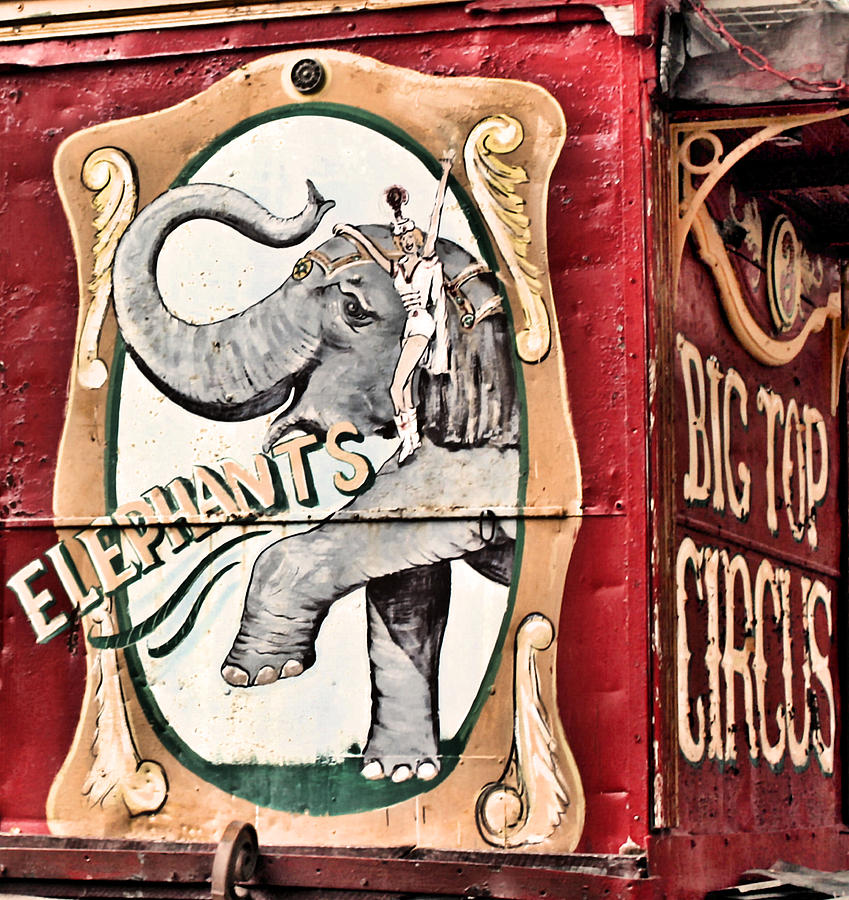 Big Top Circus Photograph - Big Top Elephants by Kristin Elmquist
