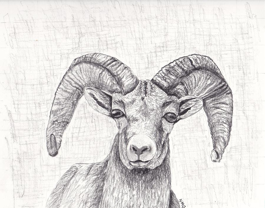 It's just a picture of Revered Bighorn Sheep Drawing