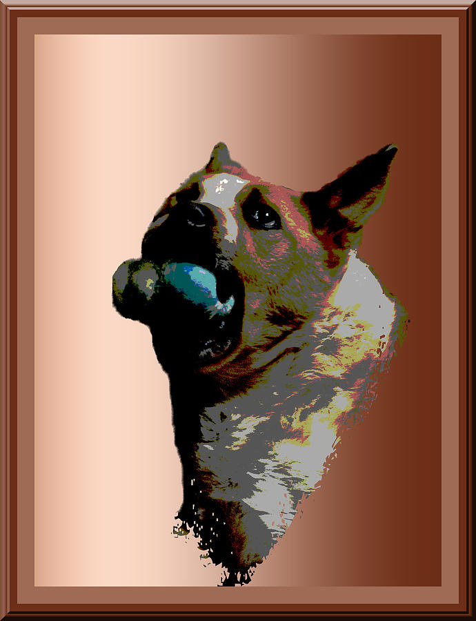 Dog Photograph - Binky by One Rude Dawg Orcutt