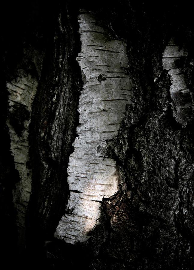 Birch Photograph - Birch Abstraction by Odd Jeppesen
