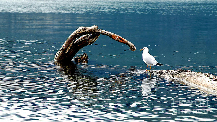 Water Photograph - Bird And Log by Barry Shaffer