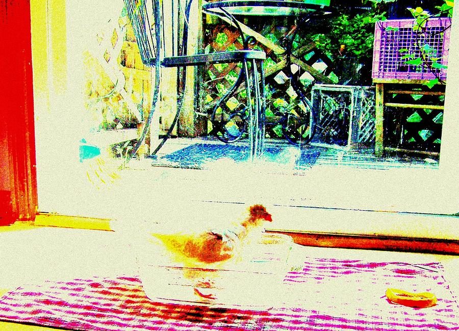 Pigeon Mixed Media - Bird Bath by YoMamaBird Rhonda