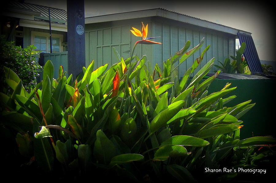 Flower Photograph - Bird Flower by Sharon Farris