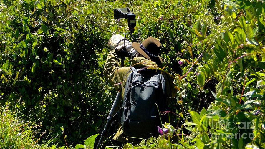 Al Bourassa Photograph - Bird Hunting by Al Bourassa