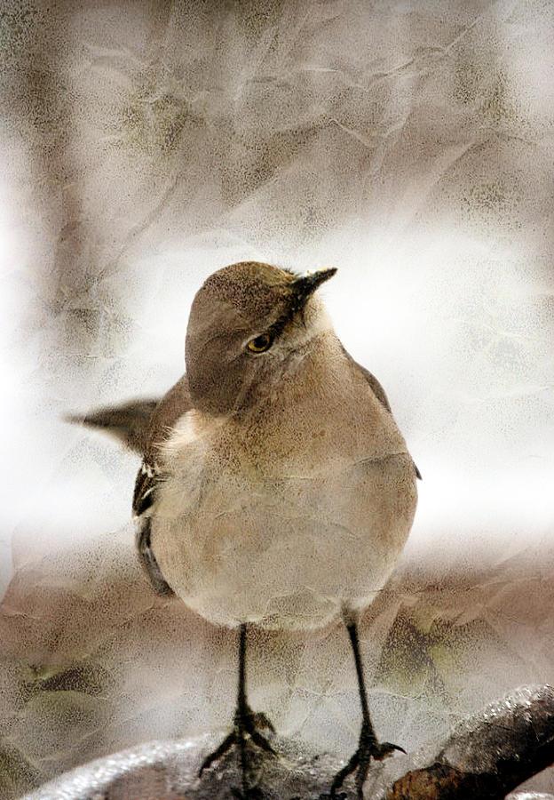 Mocking Bird Photograph - Bird In A Bag by Skip Willits