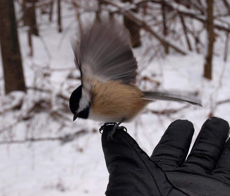 Winter Photograph - Bird In The Hand by Joshua House