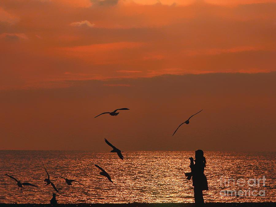 Shade Photograph - Bird Meets Birds by Graham Taylor