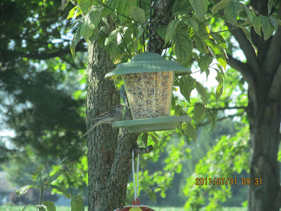Birds Photograph - Bird On Full Feeder by Tina M Wenger
