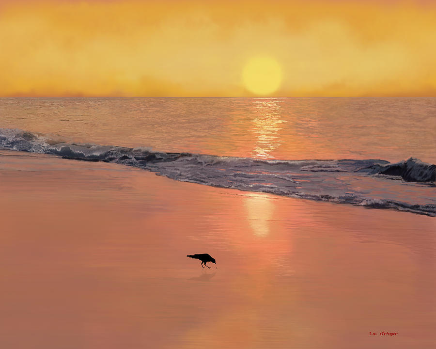Sunset Painting - Bird On The Beach by Tim Stringer