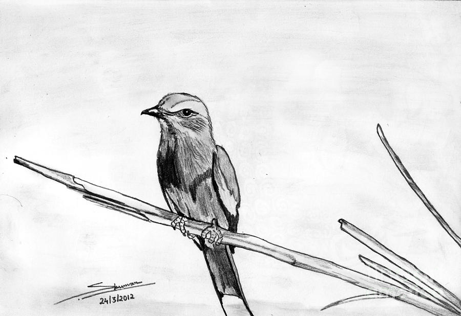Landscape Drawing - Bird by Shashi Kumar