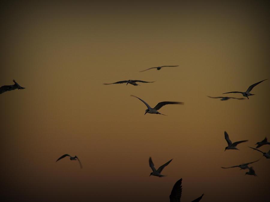 Bird Photograph - Bird Sky by James Granberry