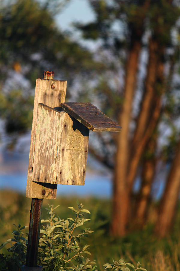Birdhouse Photograph - Birdhouse 23 by Andrew Pacheco
