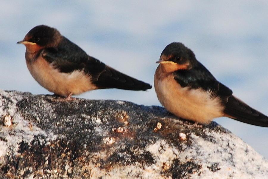 Birds Photograph - Birding by Paulina Roybal