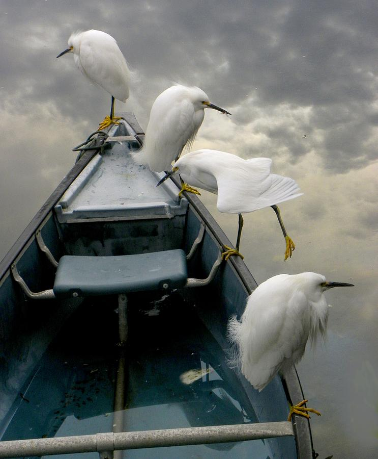 Egrets Photograph - Birds Boat And Beyond by Henry Murray