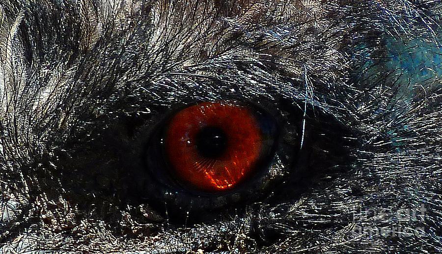 Emu Photograph - Birds Eye by Methune Hively