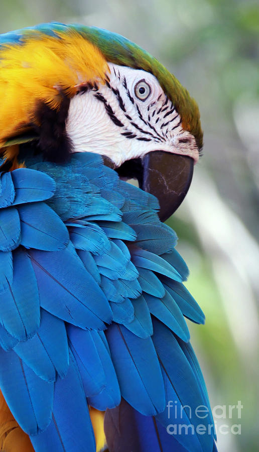 Parrot Photograph - Birds Eye View by Glennis Siverson