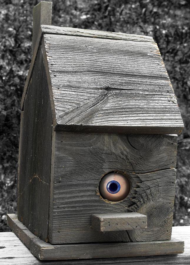Bird House Photograph - Birds Eye View by Kristie  Bonnewell