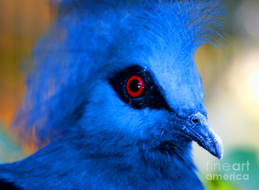Zoo Photograph - Birds Eye View by Tap On Photo