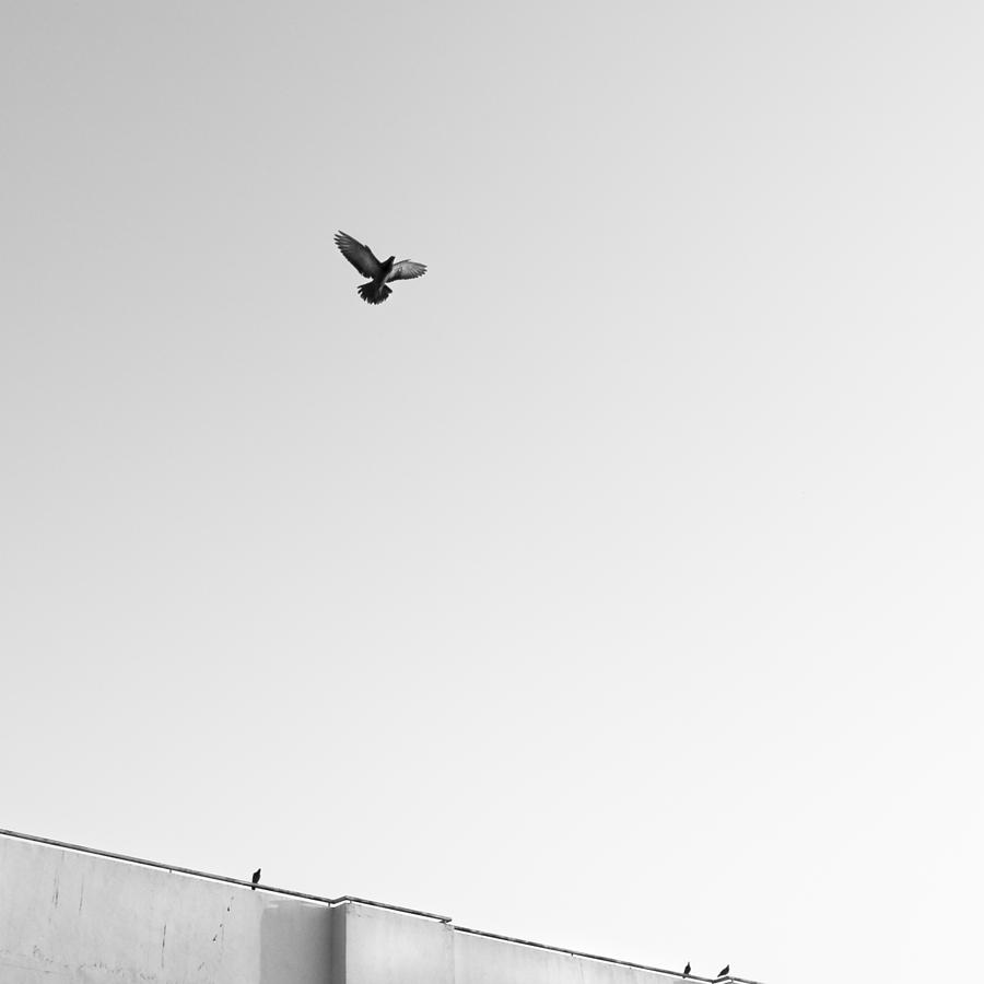 Square Photograph - Birds Flying In The Sky by Tontygammy + Images