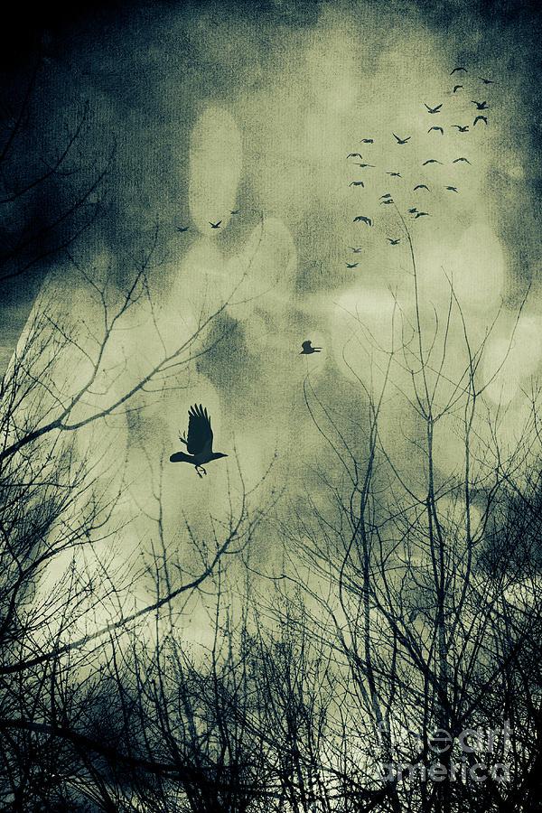 Atmosphere Photograph - Birds In Flight Against A Dark Sky by Sandra Cunningham