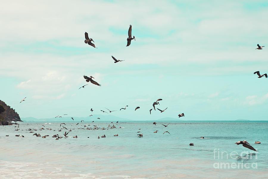 Pelicans Photograph - Birds in Flight by Kim Fearheiley