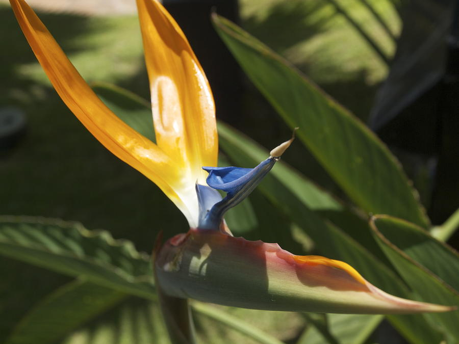 Paradise Photograph - Birds In Paradise by Larry Toth