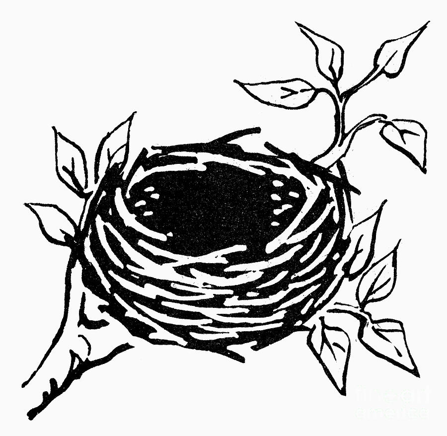 This is a graphic of Dashing Bird In Nest Drawing